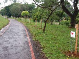 Prefeitura de Estação realiza reposição florestal urbana