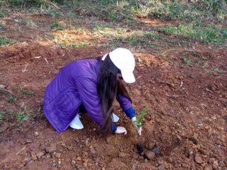 Programa de Educação Fiscal juntamente com alunos do 5º ano das escolas municipais de Estação realizam projeto de reflorestamento no antigo aterro sanitário